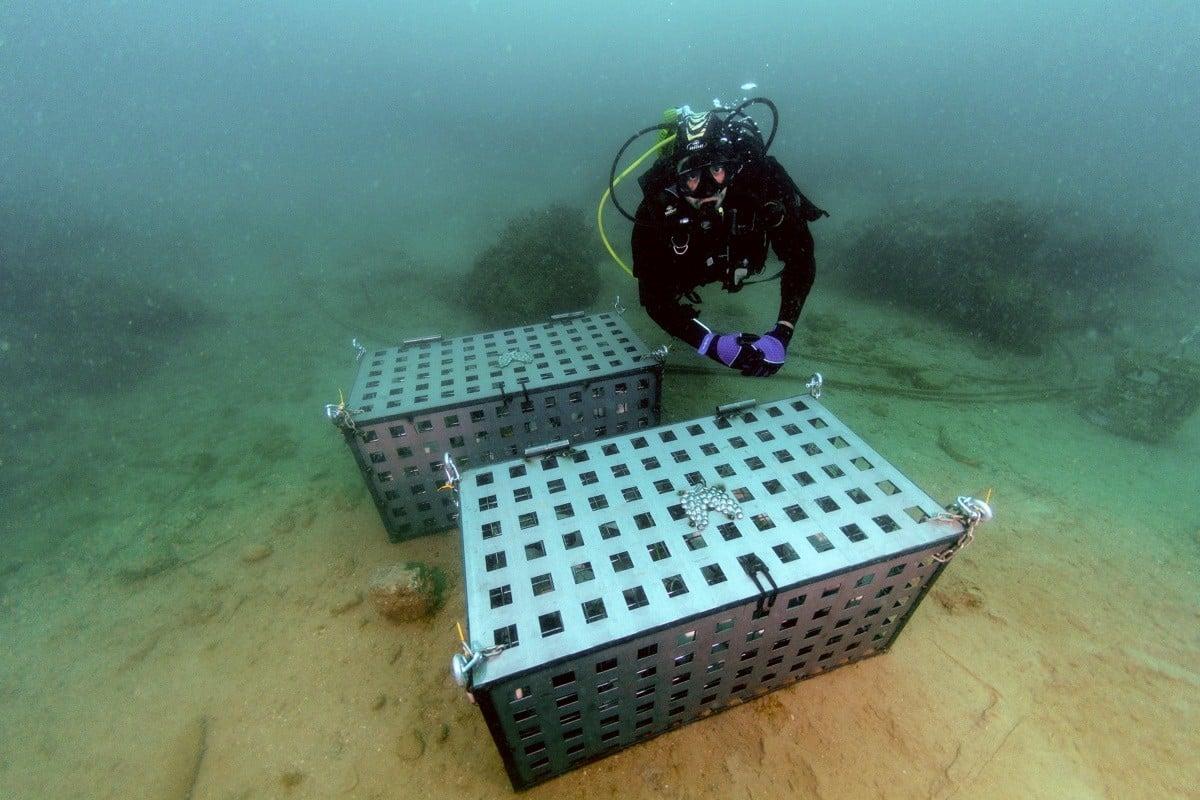 El moment en què deixen àmfores de vi sota les aigües del Port de Tarragona.