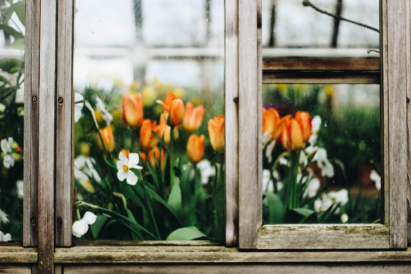 Primavera sense cortina