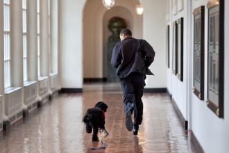 Mor Bo, el gos dels Obama: «La nostra família ha perdut un amic vertader»