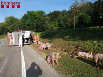Bolca un camió amb 160 porcs a la Vall d'en Bas