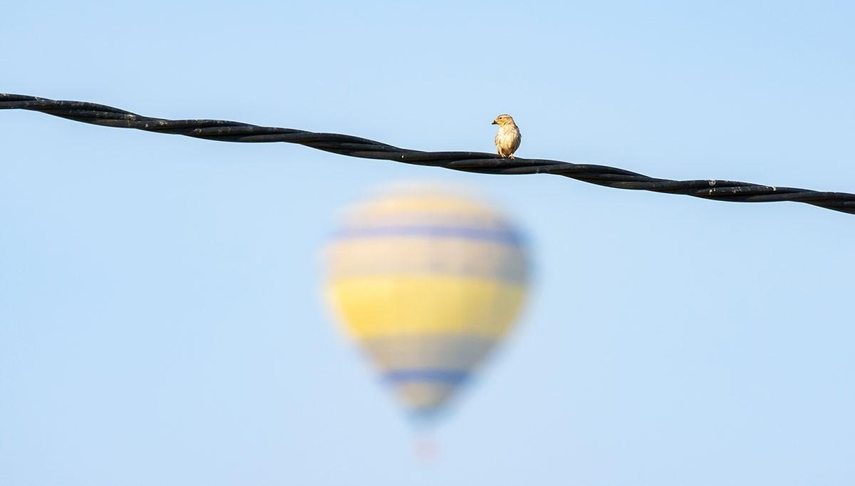 Un pardal i un globus, aquest matí a la plana de Vic, sense un sol núvol al cel
