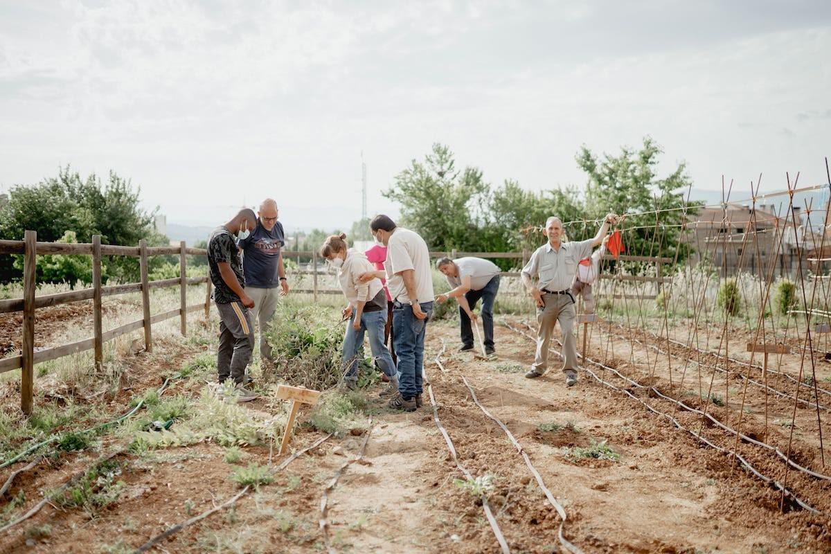 Participants del projecte 'Llavors d'Oportunitats' treballant a l'hort