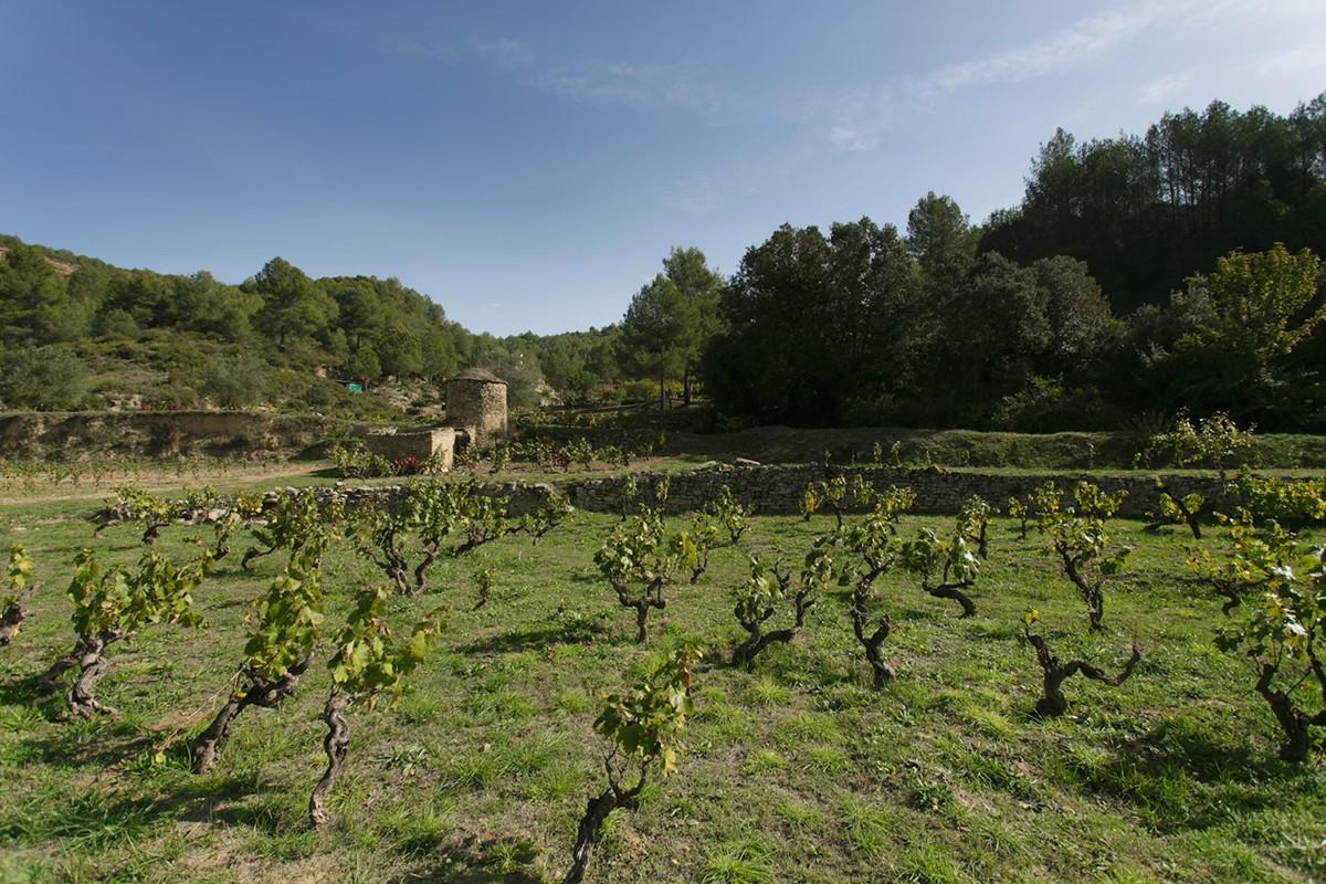 La finca de l'Arboset té prop d'una hectàrea de varietats tradicionals del Bages com el mandó, el sumoll o el picapoll, entre altres.