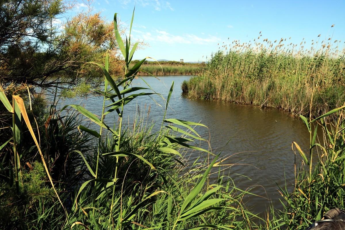L'estany de la Ricarda