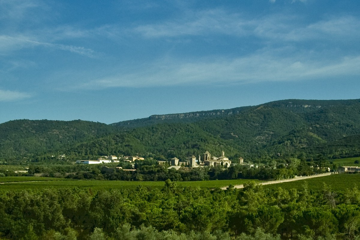 La Conca de Barberà compta actualment amb 2.875 ha de vinya