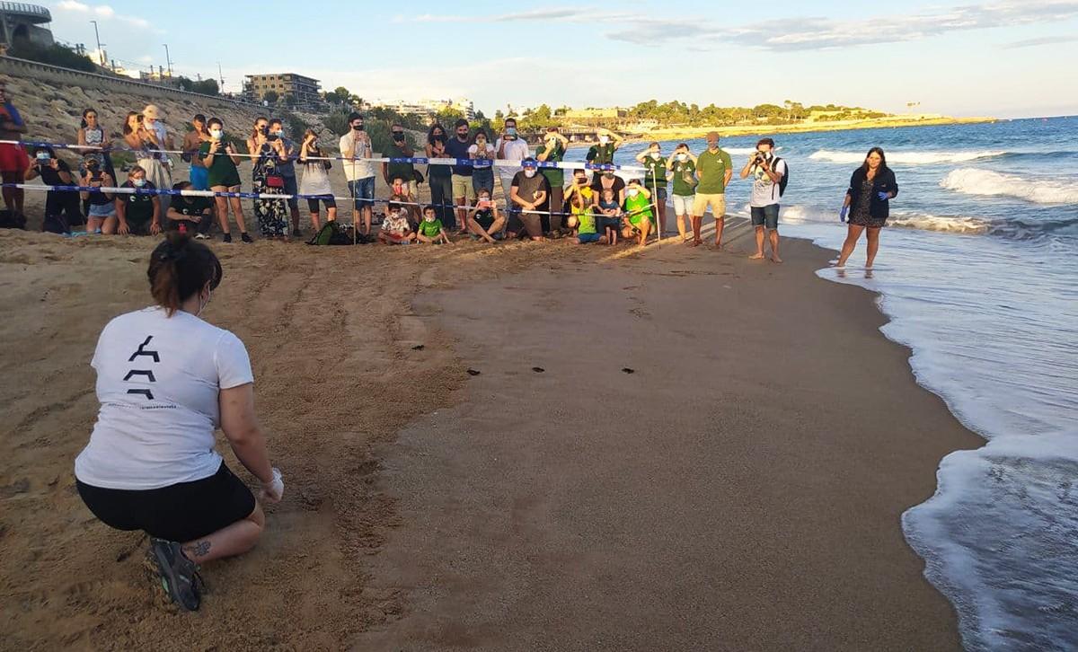 Les tortugues han entrat a l'aigua amb l'acompanyament del CRAM.