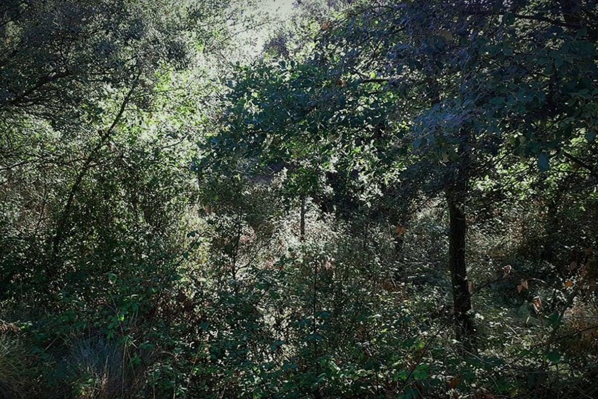Massa forestal del Berguedà sense gestió