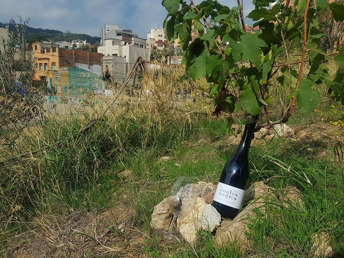 El vi Ungles Negres, sorgit entre Barcelona i el Priorat