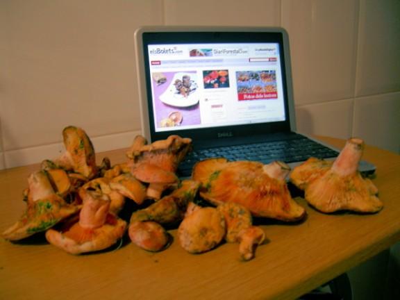 Les fotos de les troballes, a elsBolets.com