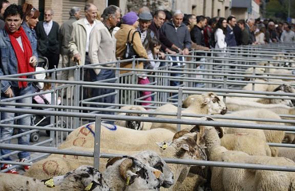 Ripoll celebra la Fira ramadera de Santa Teresa