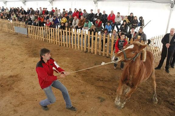 Buscant els millors cavalls pirinencs