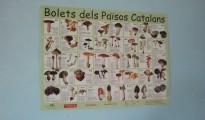 Un pòster de bolets dels Països Catalans enerva els blavers aragonesos