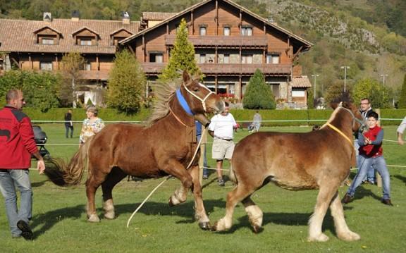 El Mas la Ginestera té els millors cavalls pirinencs del Ripollès