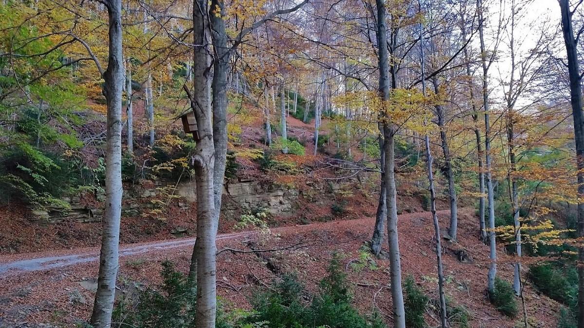 Resultado de imagen de el bosc